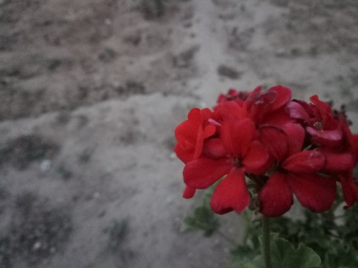 ZTE Nubia M2lite Camera samples low light