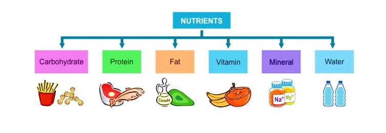 nutrients apps for android and ios iphone