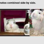 How to merge multiple photos to one, on Windows 10 8 7