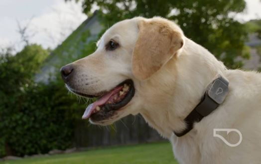 Whistle GPS Pet Tracker For dogs, cats, rabbits, and others