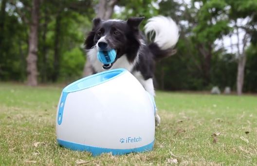 Top Pet Gadgets iFetch Pet Toy For dogs, cats