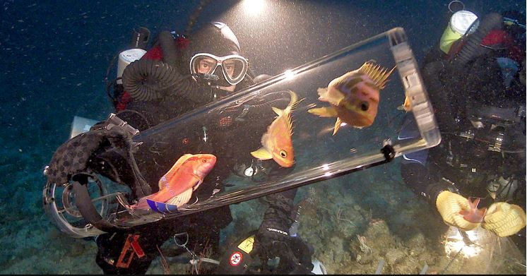 A Portable Decompression Chamber To Protect Fish From Injury