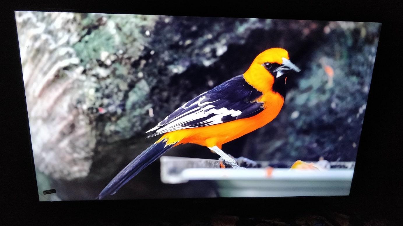 Kodak 43UHDX7XPRO colour min