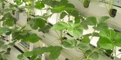 ensure hygiene using new technology when working in food plants